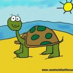 Cuentos infantiles- La tortuga amable de la playa