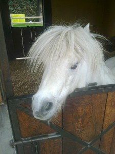 caballo-cuentos-infantiles-cortos