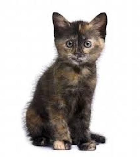 cuentos-infantiles-gato