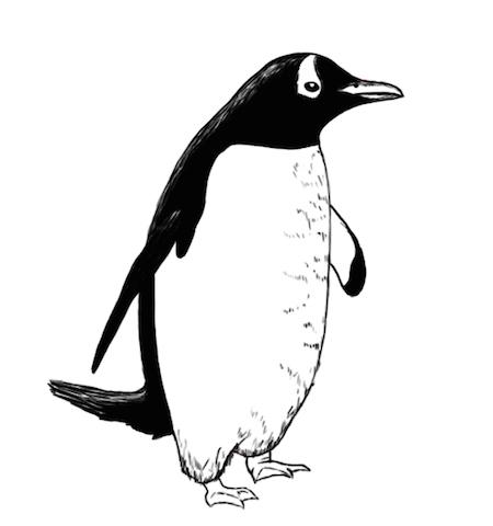 cuento-infantil-pingüino
