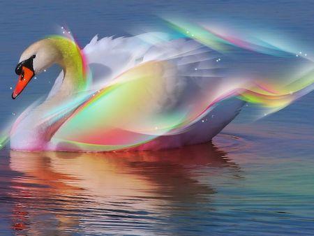 cuento-infantil-cisne-magico